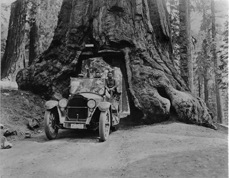 1920-1923 Packard touring car coming through redwood tree